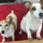 Evie & Ernie